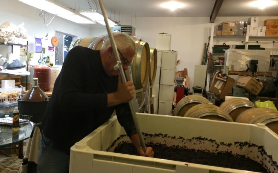 Neil Shay stirring a bin of wine grapes in his lab