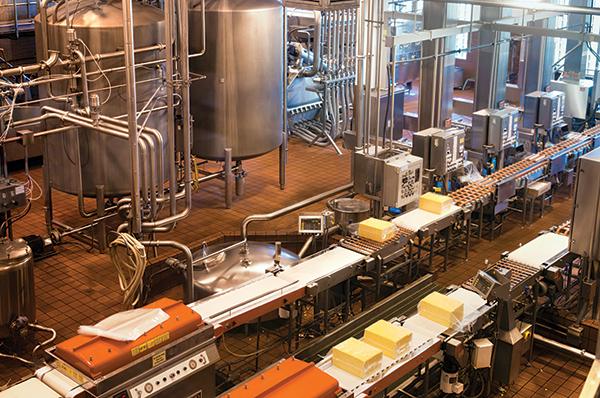 奶酪厂生产