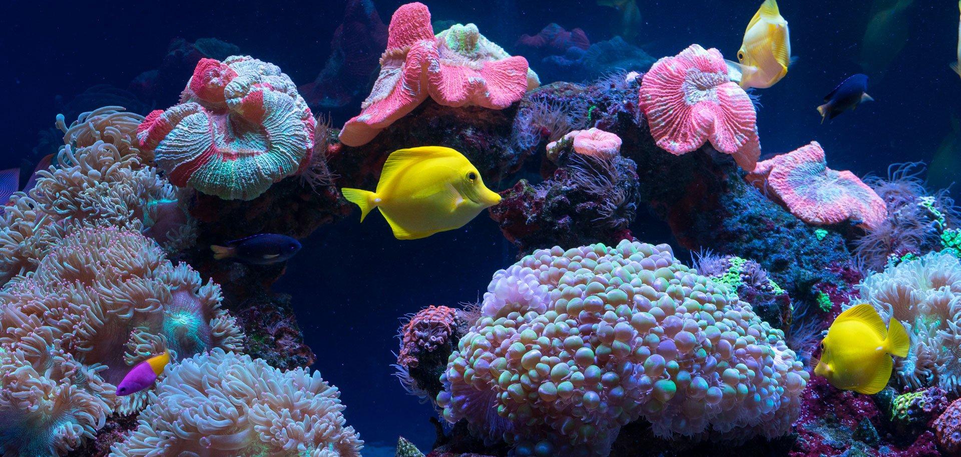 Blog-Photo-Aquarium-Testing-Header