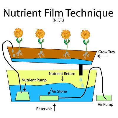 NutrientFilmTechnique