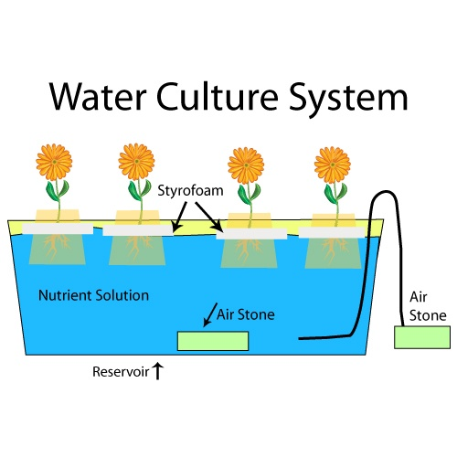 WaterCultureSystem