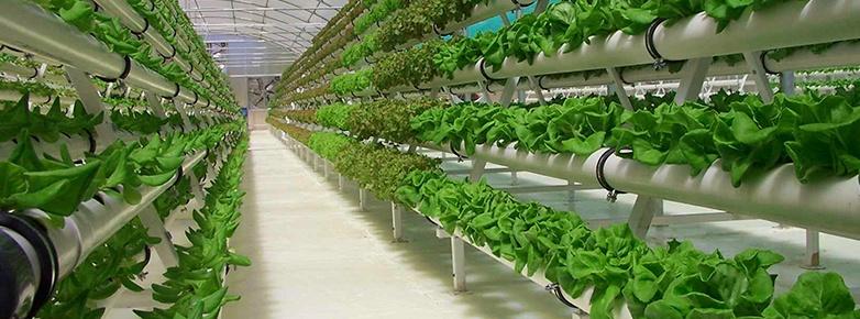 hydroponics-banner