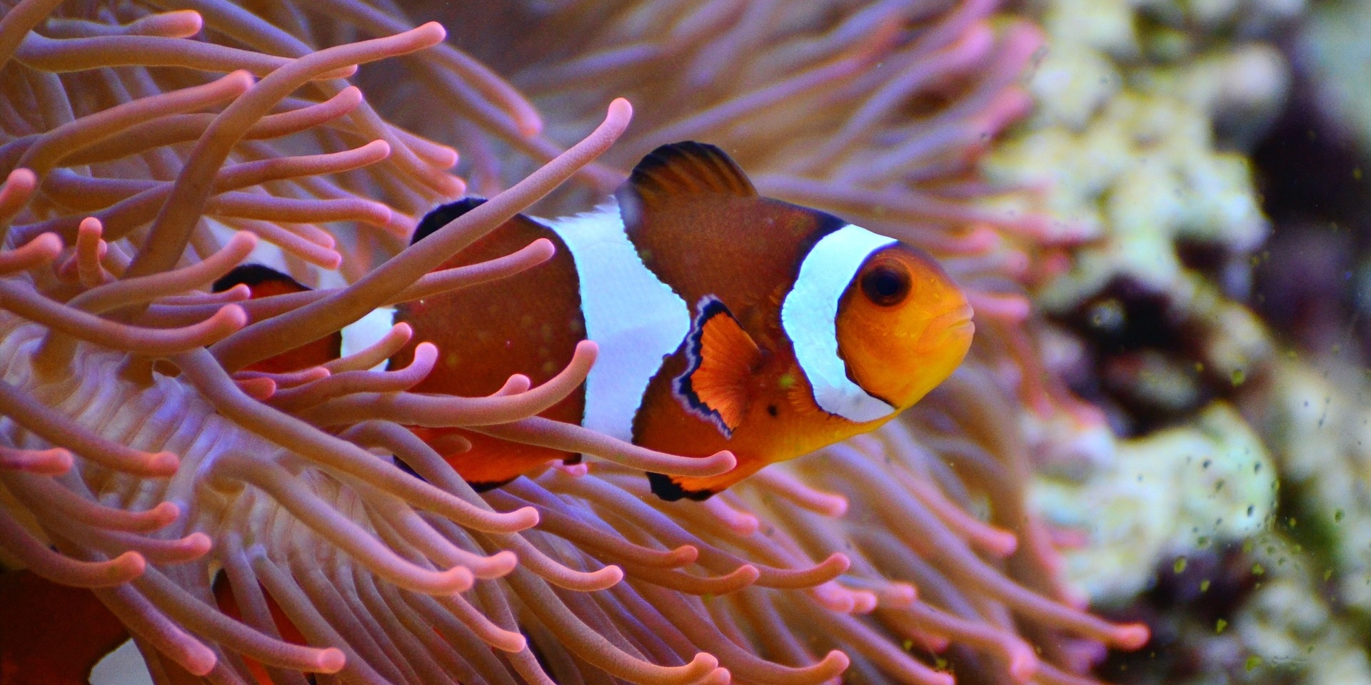 Clownfish in Plants