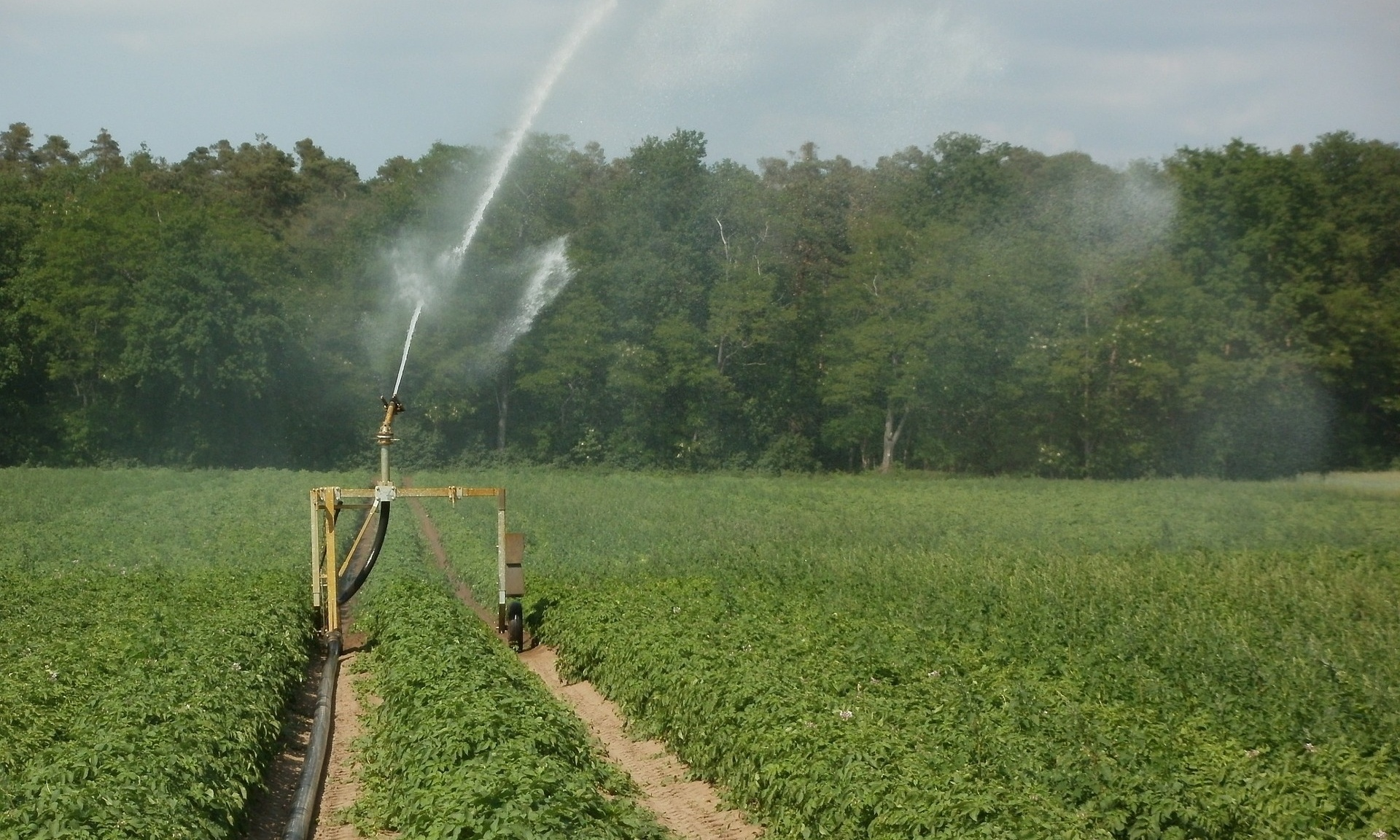 Irrigation-709358-edited.jpg