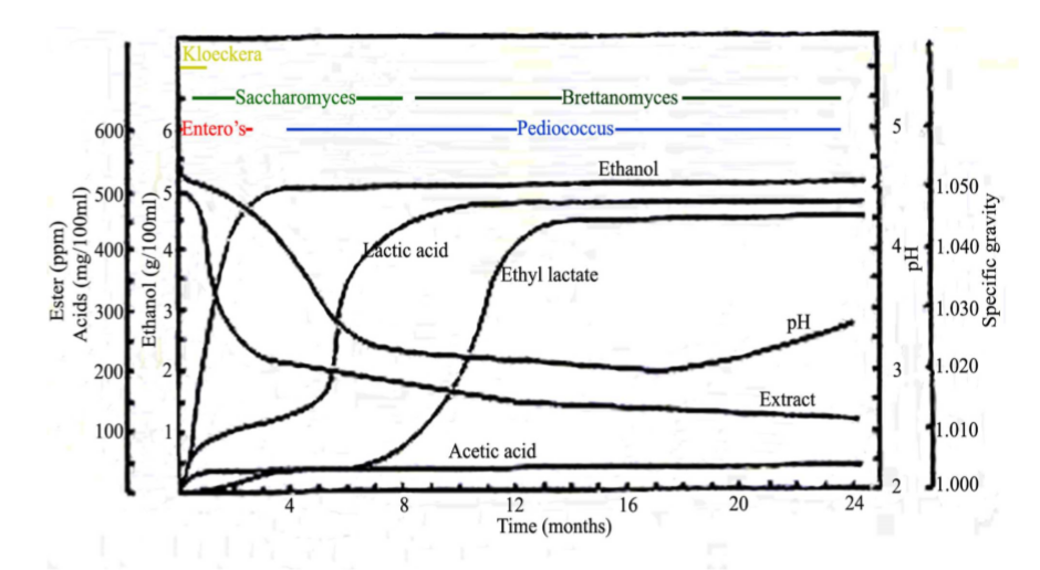 Lambic_fermentation_microbiological_profile
