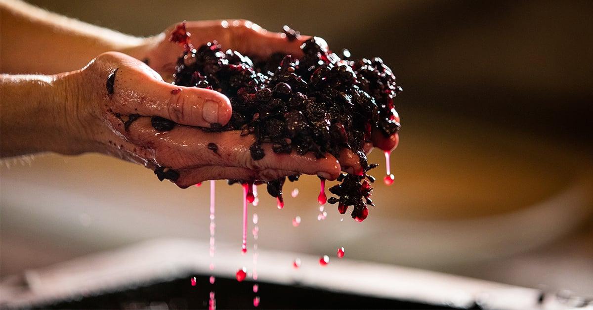 Wine-Crush-Grapes