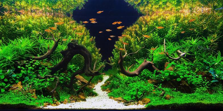 Freshwater aquascaping tank