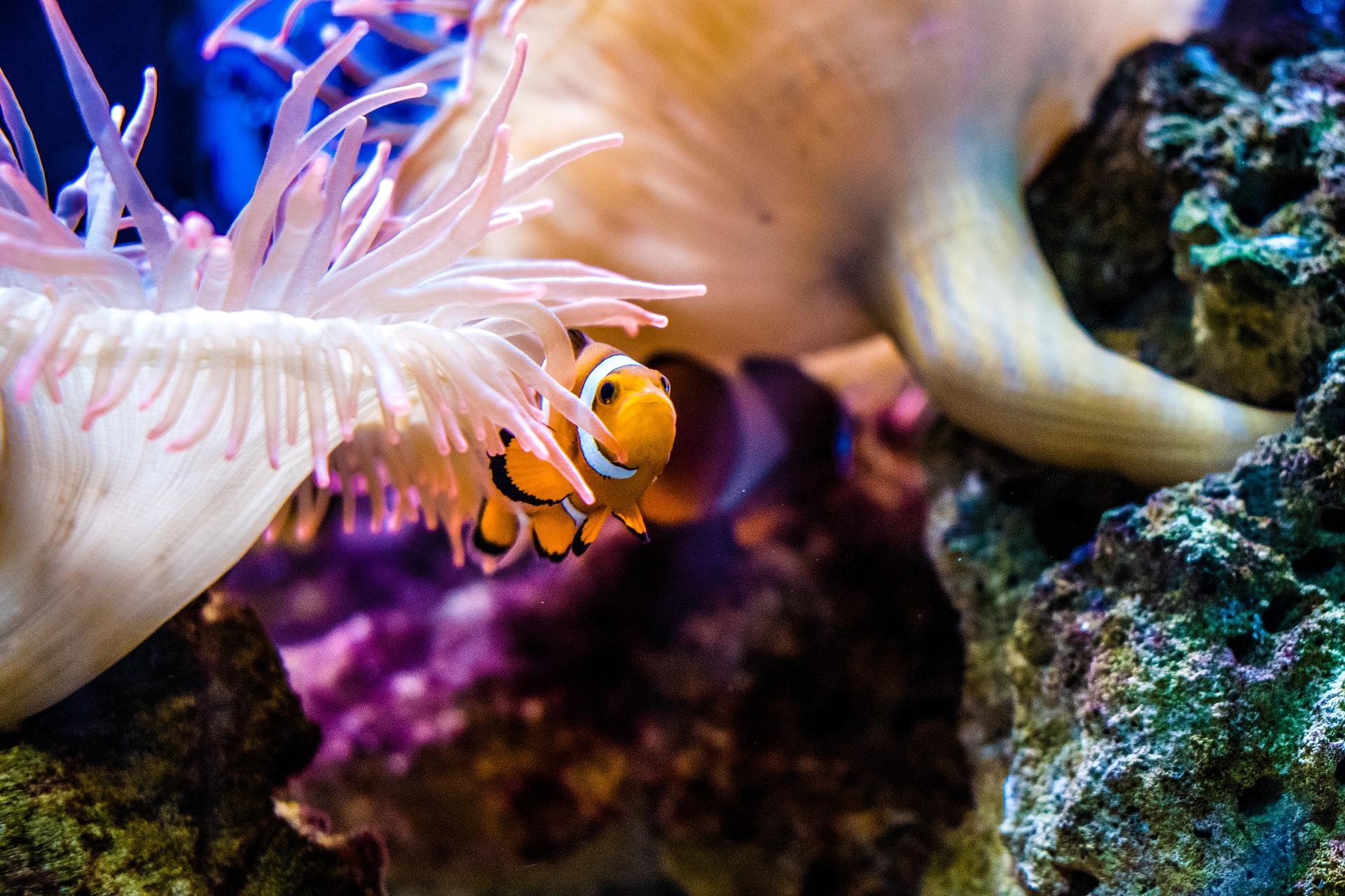 Weshalb überprüft man den pH-Wert im Aquarium?
