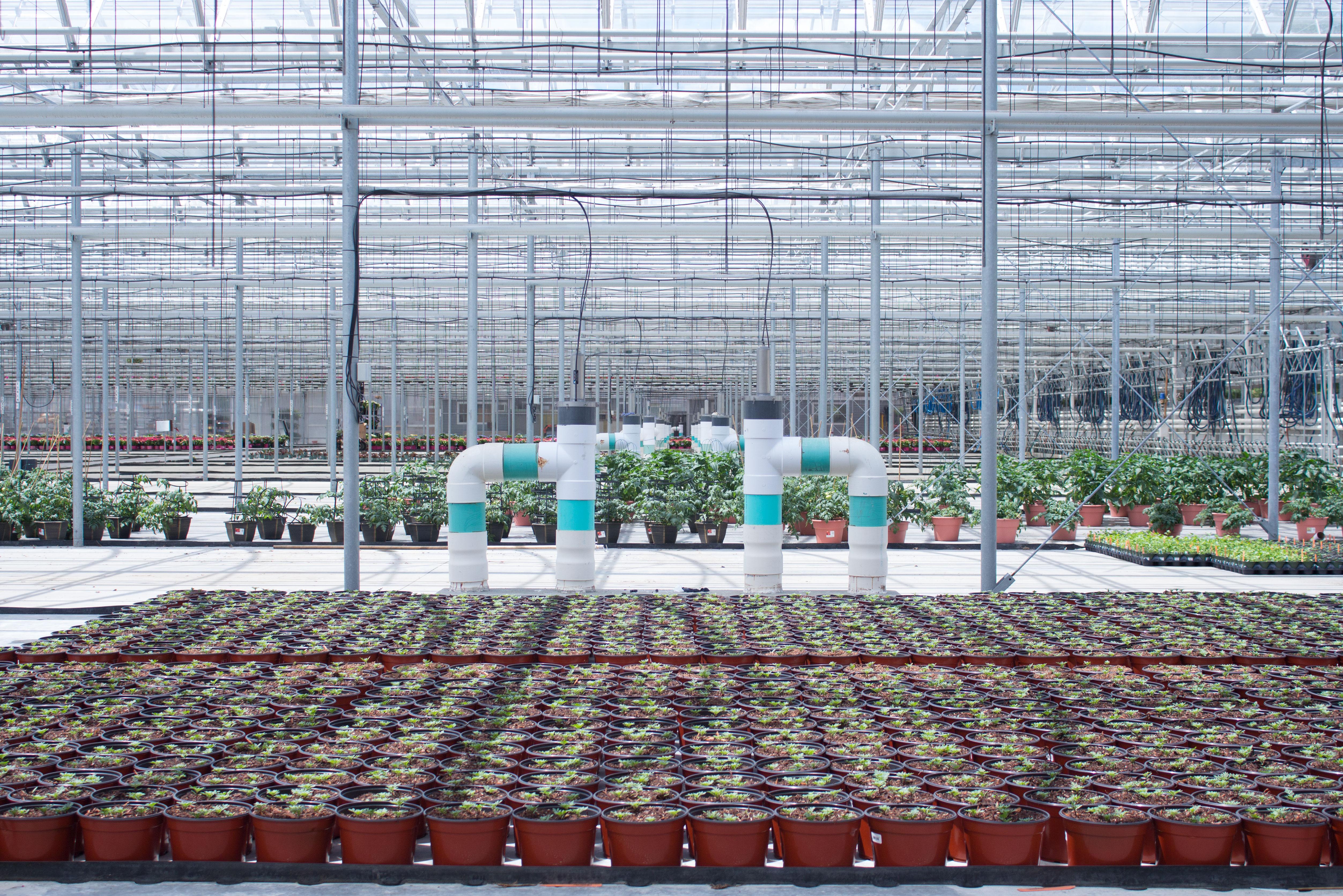 greenhouse with fertigation system