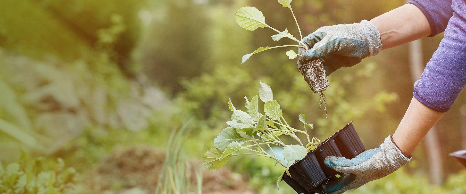 home-gardening-1