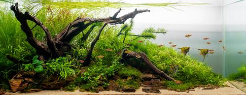Slatkovodni zasađeni akvarijum