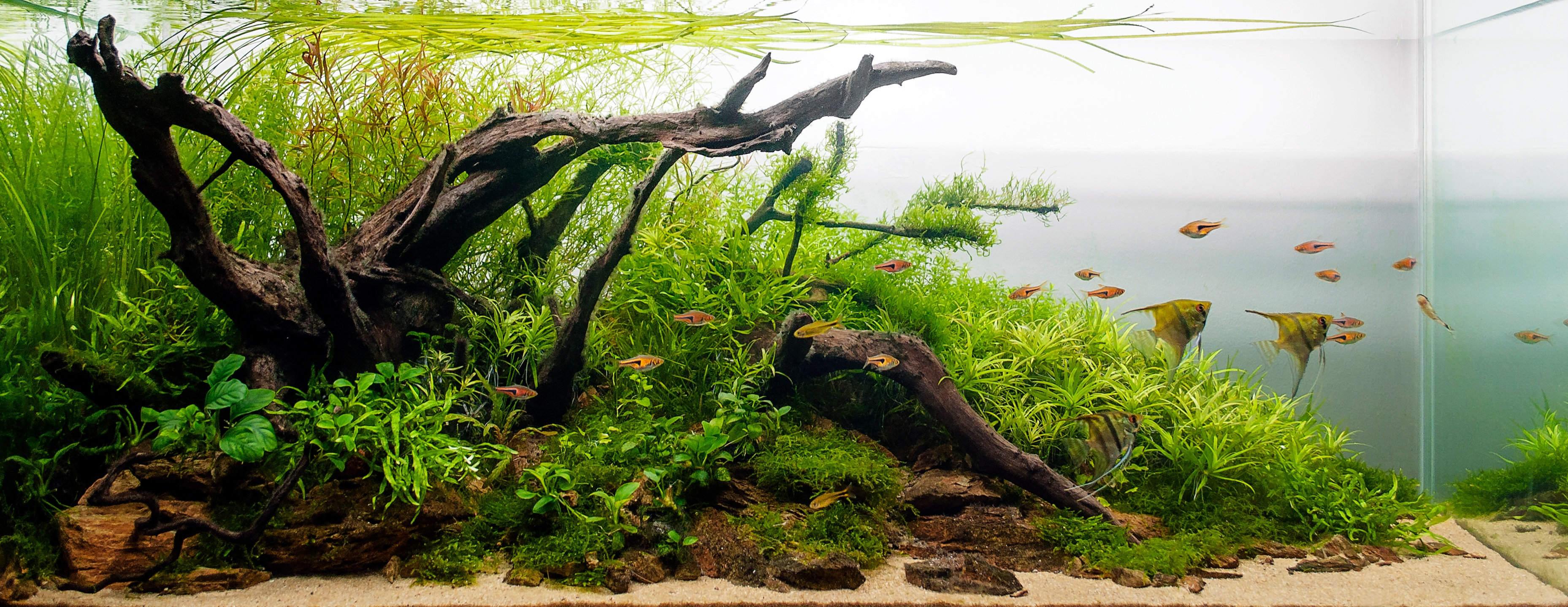 Freshwater planted tank with fish