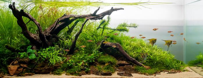 Aquascaping The Art And Science Of Aquariums