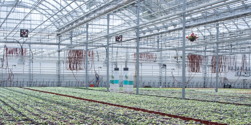 indoor hydroponic greenhouse with fertigation and irrigation control system